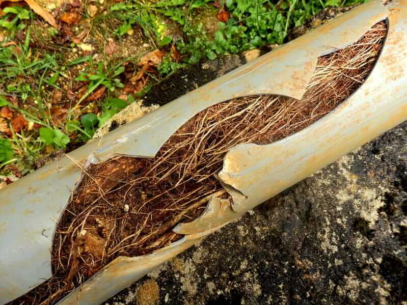 Tree roots can quickly wreak havok on your pipes.